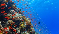After Deepwater Horizon spill, 21 deep sea coral sites win protection