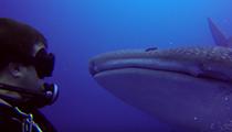 Divers film rare encounter with whale shark near Jupiter, Florida