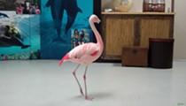 Orlando man who allegedly killed flamingo at Busch Gardens dies in car crash
