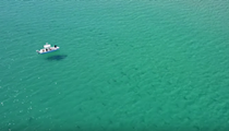 Drone video shows thousands of sharks migrating off Florida coast
