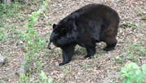 Florida middle school won't let kids leave on foot because of a nearby bear