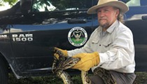State removes thousands of invasive Burmese pythons from the Florida Everglades
