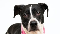 Meet Daisy! She's housebroken, leash-trained, and can be adopted today in Orange County