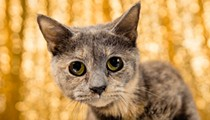 Orange County Animal Services needs help housing 71 rescued cats