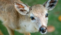 Florida receives federal funds for 'foreign animal' preparedness and fighting diseases in deer