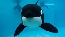 SeaWorld to pay $65 million settlement in shareholder lawsuit over 'Blackfish' film