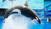 SeaWorld Orlando's reopening met with new push by fans to remove board chairman Scott Ross
