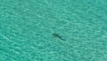 Well, at least there have been fewer shark attacks in Florida