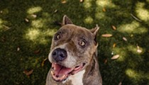 Look at the big smile on Tina, an adoptable dog you can meet today!