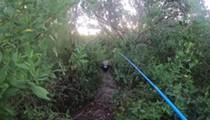 Florida fisherman runs from large alligator in terrifying video