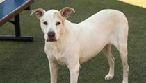 Sweet, friendly Ollie is 11 years old and free to adopt from Orange County Animal Services