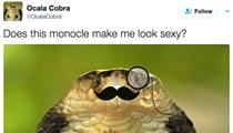 There's already an OcalaCobra Twitter account