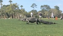 A reminder that the biggest gators will always be found on golf courses