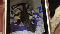 Florida college students thought it was cool to bring a dead gator inside their dorm