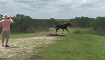 Wild horse fights gator in Florida state park