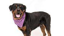 Gimme Shelter: Meet Ralphie