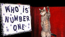 The Amazing Acro-Cats play a double feature in Sanford this weekend