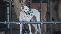 Greyhound dies at Sanford Orlando Kennel Club after eating old meat
