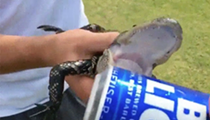 Please don't use gators to open your shitty beer
