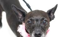Gimme Shelter: Meet Gia!