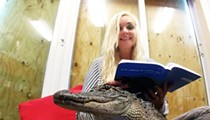 Here's how Gatorland's reptiles and other Orlando theme park animals fared during Hurricane Irma