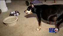 Extremely chubby dog survives bear attack in Altamonte Springs because of girth