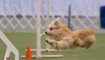 Win tickets to the 2017 AKC National Championship