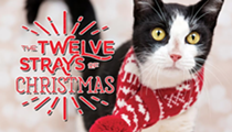 Get to know the twelve Christmas cats of Orlando, and maybe bring one home