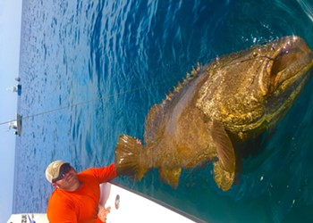 FWC may relax rules on fishing Goliath Grouper, a hearty fish of the sea