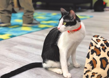 Orlando playwright and entrepreneur David Strauss becomes a 'purr-fessional cat wrangler' with new Kitty Beautiful cat café