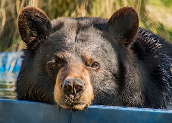 Florida could permit bear hunting again, Planet Hollywood allegedly took state money and ran, and other news you may have missed