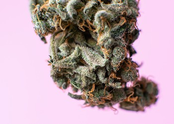 The 420 Issue: How to get your medical marijuana card in Florida