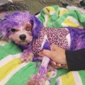 Florida dog nearly dies after owner attempts to color it purple