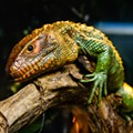 Repticon visits Kissimmee this weekend for all your herpetological needs