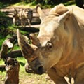 Disney will allow guests to touch a rhino at Animal Kingdom