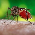Zika cases in Florida continue slow increase