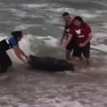 Newborn sperm whale dies after washing up on shore in Flagler Beach