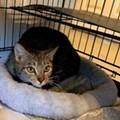 Gimme Shelter: Meet Clydette