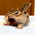 Happy Monday. Are you as ready for the week as this wiggly chipmunk is?
