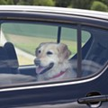 A proposed Florida bill will allow people to smash car windows to free pets
