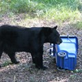 Seminole County is considering mandatory bear-proof trashcans
