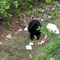 A man was cited during Florida's bear hunt for using Honey Buns as bait