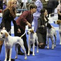 Celebrate dogs at the AKC Eukanuba National Championships this weekend at the convention center