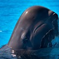 Second whale this year dies at SeaWorld Orlando