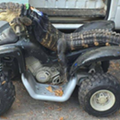 Florida woman gets to keep her ATV-riding pet gator 'Rambo'