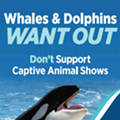 'Whales and dolphins want out,' says new Lake Buena Vista ad campaign aimed at SeaWorld