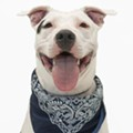 Meet Kilo! This sweet boy is looking for his fur-ever home