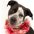 Meet Delilah, a 3-year-old sweet girl ready for her forever home