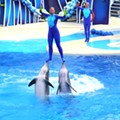 TripAdvisor's ban on shows with captive whales and dolphins could hurt SeaWorld