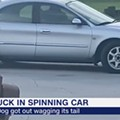 Florida dog puts car in reverse, drives in circles for an hour